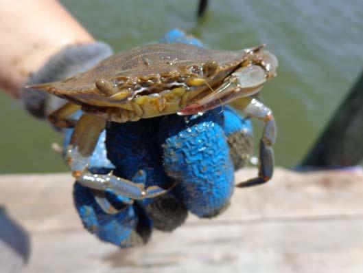 2013 Oyster Pick-Ups_L