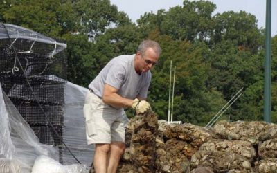 Chesapeake Bay Oyster Restoration in the news!