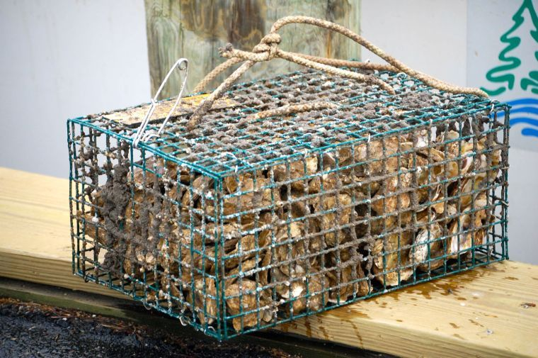 Oyster Cage Maintenance 5-8-17 to 5-14-17