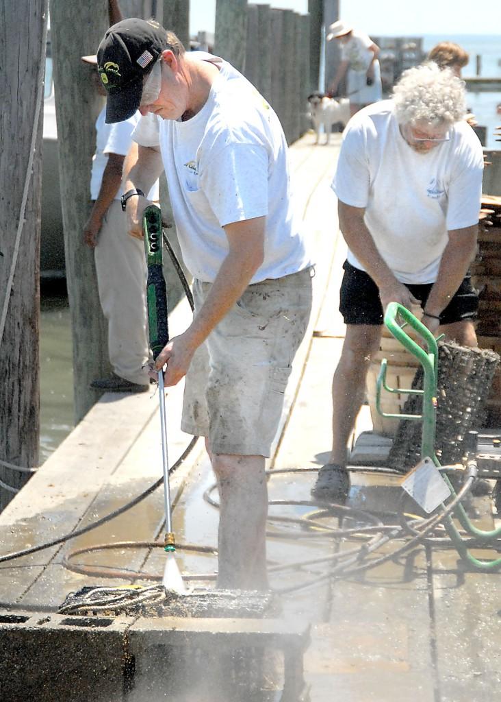 12_news_TIGO-oyster-plant991-732x1024