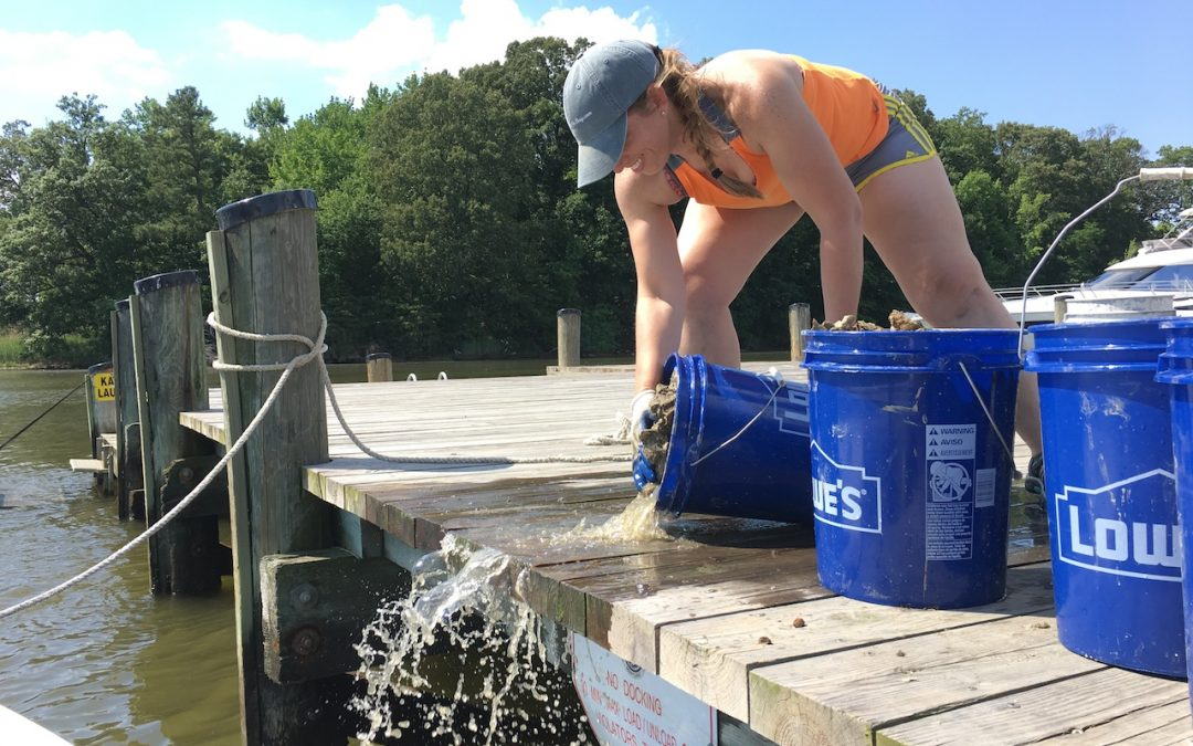 Group celebrates sixth pickup of young oysters