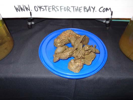 2013-Oyster-Social_G
