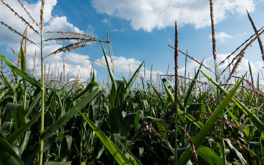 Farmers want to be good stewards of the watershed