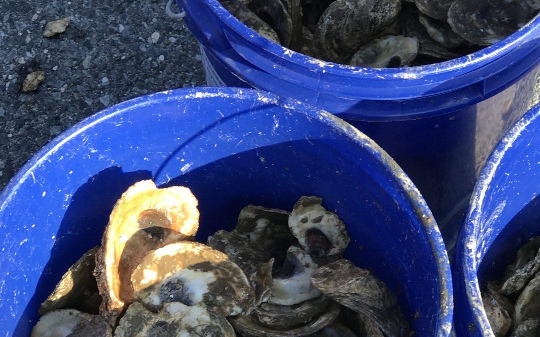 2019 Oyster Pick-up Recap