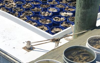 Oyster Pickup 2018